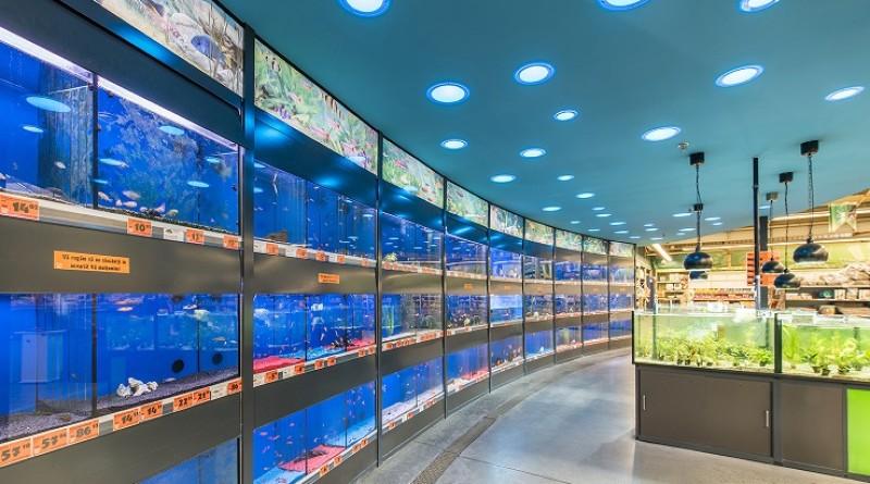 HORNBACH aduce peste 3.000 de pești în zona de acvaristică din noul magazin din Oradea